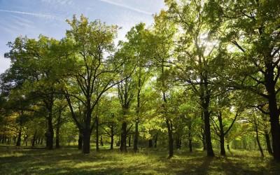 Живописные парки и заповедники Нетании