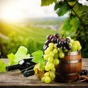 Виноделы презентуют свою продукцию