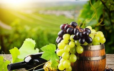 Израильские виноделы презентуют свою продукцию на фестивале вина