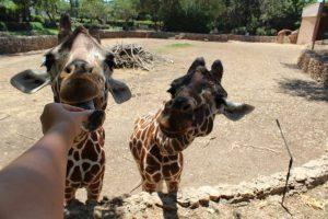 Зоопарк Сафари