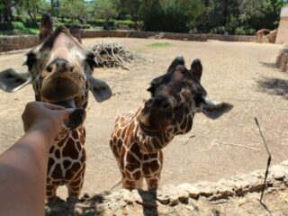 Посещение зоопарка Сафари