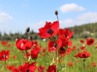 Весеннее путешествие в цветущий Негев
