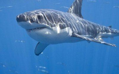 Акулы в Хадере стали достопримечательностью