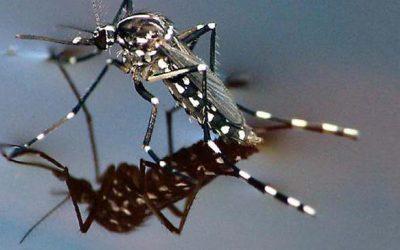 Опасный сезон комаров