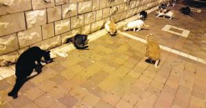 Штраф 738 шек за кормление кошек